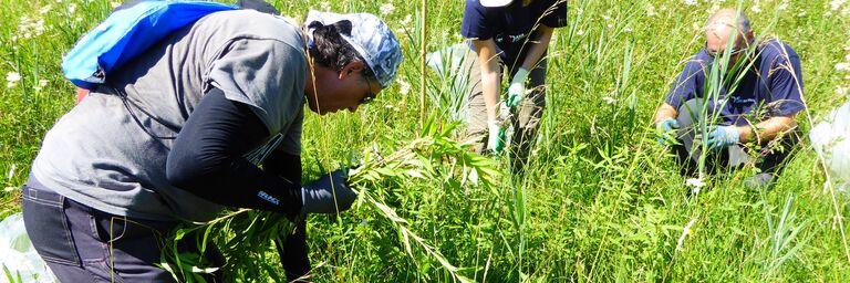 AXA Mitarbeitende schützen die einheimischen Pflanzen.