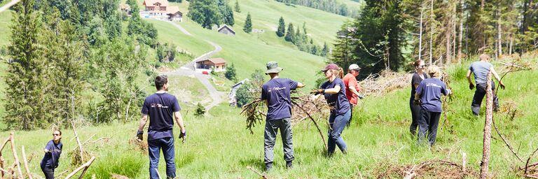 Rund 20 AXA Mitarbeitende helfen mit den Bergwald zu pflegen.