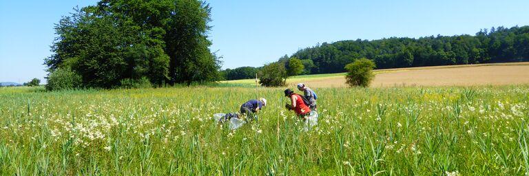 AXA Mitarbeitende setzen sich für den Naturschutz ein.